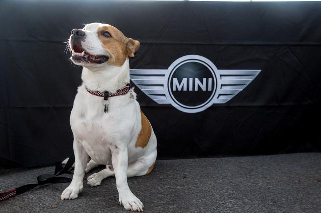 2014 MTTS Pets- Day 5 (07/2014)